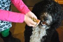Vegan Dog? https://vedgedout.com/2012/12/18/v-dog-review-and-sample-giveaway/