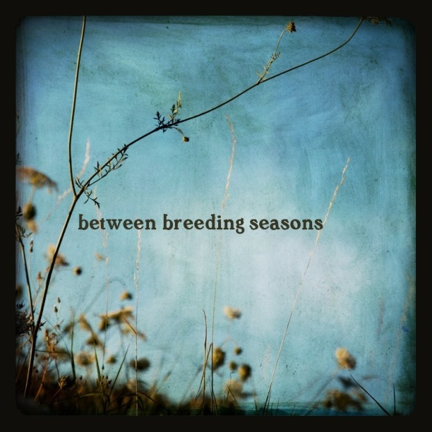 between breeding seasons